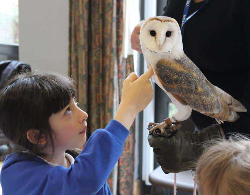 Falconry for Schools brings birds of prey into the classroom at Milverton Primary