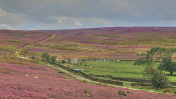 Countryside Alliance challenges Labour's land reform proposals