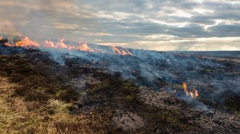 Government recognises necessity for heather burning