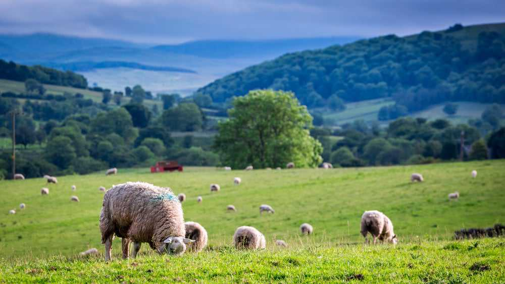 Countryside Alliance Briefing Note - Agricultural Policy - 10 October 2018