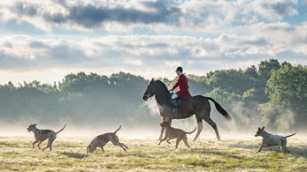 Countryside Alliance statement in response Jeremy Hunt's comments on fox hunting
