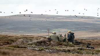 Grouse moors braced for major changes in wake of Werritty Review