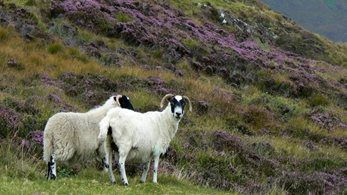 Countryside Alliance welcomes Agriculture Bill's recognition of the Uplands
