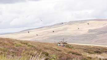 Scottish CA welcomes significant Scottish Government commissioned research on grouse shooting