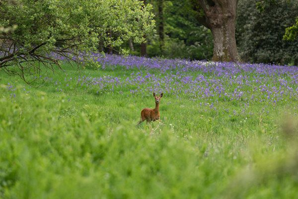 Live quarry shooting and deer stalking in England from May 13th