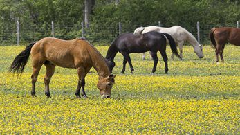 Coronavirus (COVID-19) advice for horse owners and equestrians