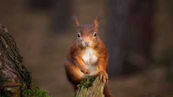 Red squirrel wildlife hikes: The last 5 locations to see the endangered mammals in England